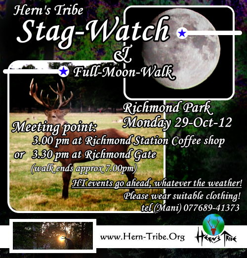 HT Stag-Watch at Richmond park (and full moon walk)