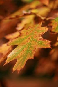 autumn druids