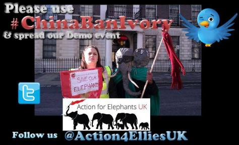 Action for Elephants - Peaceful Demo outside Chinese Embassy, London (photo ~V)