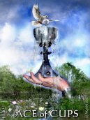 Ace of Cups (c) ManN 2011-sm