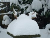 snow covered antlers