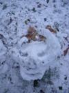 snow horned- st james park 2010