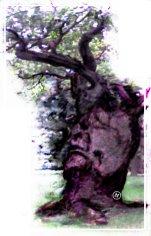 Tree spirit2- enhanced- Art of Mani