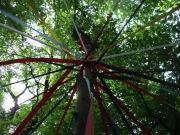 Woodland Beltane 2017- Maypole